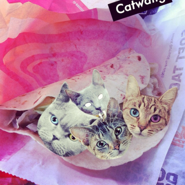 cat, catwang, taco, app, iPhone